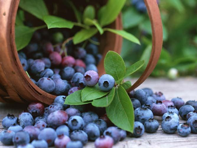 Лісові ягоди - чорниця