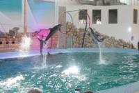 дельфіни в Трускавці