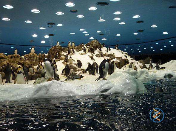 Пінгвінарій у Трускавці