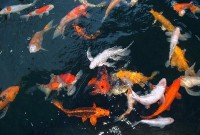 Ставок для риб