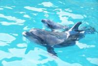 народження дельфінчика