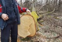 порушення лісників
