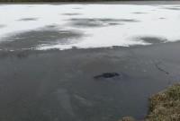 потопельник у Бориславі