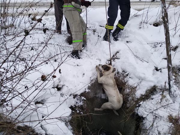 собаки в колодязі