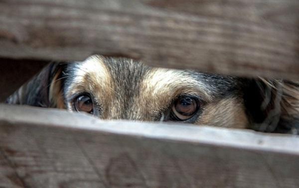 суд за вбивство собаки