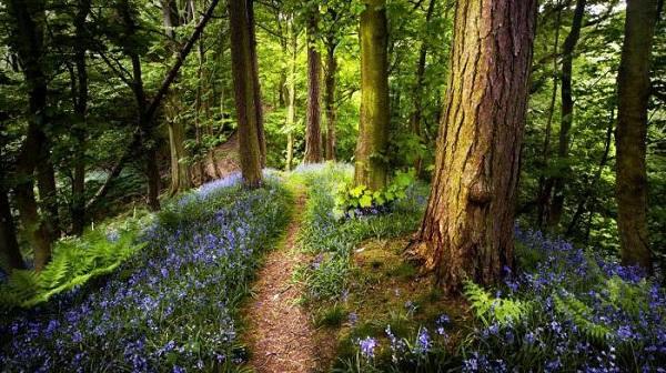 Майбутнє лісу
