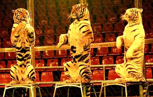 тварини у цирку