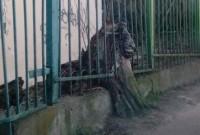 Львів лева