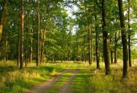 відвідувати ліси