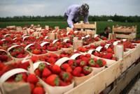 Поляки планують організовувати чартерні рейси для українських робітників