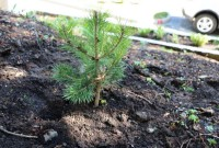 Озеленення Трускавця