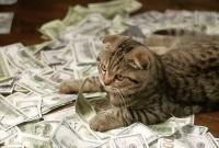 кішка бухгалтер
