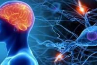 Дієтолог перерахував корисні продукти для нервової системи
