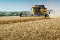 зерно нового врожаю