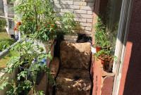 сад коноплі